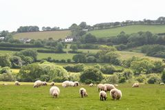 Paisagem do parque nacional de Dartmoor Foto de Stock Royalty Free