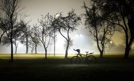 Paisagem do parque nevoento e misterioso na noite Área vazia fotografia de stock royalty free