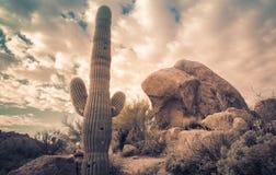 Paisagem do pedregulho do cacto do deserto do Arizona Fotos de Stock