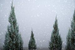 Paisagem do pinho ou do abeto da árvore de Natal com queda de neve no fundo do céu no inverno Fotografia de Stock Royalty Free