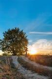Paisagem do por do sol com o homem da árvore e do carvalho sob ele Imagem de Stock Royalty Free