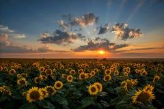 Paisagem do por do sol do verão Fotos de Stock