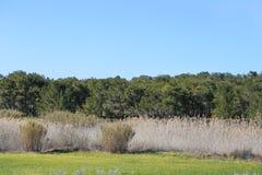 A paisagem do prado com árvores Foto de Stock Royalty Free