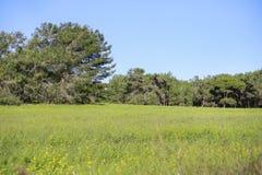 A paisagem do prado com luz suave Imagem de Stock