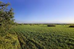 A paisagem do prado com luz suave Imagem de Stock Royalty Free