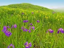 Paisagem do prado da mola com flores violetas Foto de Stock Royalty Free