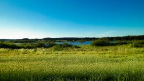 Paisagem do prado e da lagoa no fundo imagem de stock royalty free