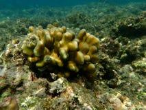 Paisagem do recife de corais do Mar Vermelho Imagens de Stock