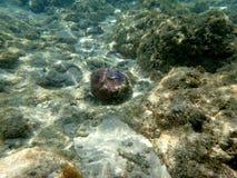 Paisagem do recife de corais do Mar Vermelho na luz do sol Imagens de Stock Royalty Free