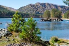 Paisagem do rio de turquesa com as ilhas rochosas no fundo de árvores coníferas imagem de stock royalty free