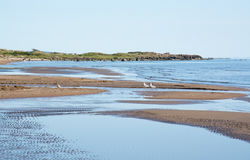 Paisagem do Sandy Beach Imagem de Stock