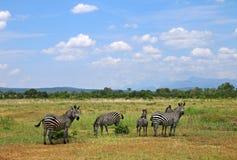 Paisagem do savana do parque nacional de África com zebras imagens de stock
