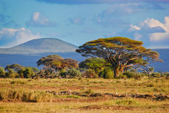 Paisagem do Savanna em África, Amboseli, Kenya Imagens de Stock