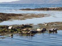 Paisagem do selo de porto, Escócia Fotos de Stock