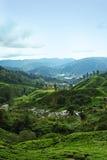 Paisagem do vale da plantação de chá Foto de Stock Royalty Free