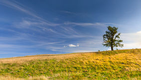 Paisagem do verão com árvore Imagens de Stock Royalty Free