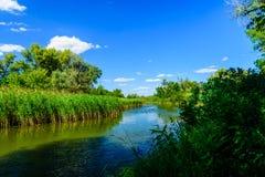 Paisagem do verão com as árvores e o rio verdes foto de stock