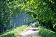 Paisagem do verão com estrada de madeira fotografia de stock