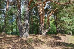 Paisagem do verão com floresta fotografia de stock royalty free