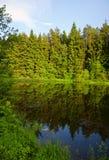 Paisagem do verão com lago e árvore da floresta fotos de stock