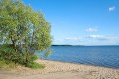 Paisagem do verão com lago Seliger Fotografia de Stock