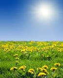 Paisagem do verão com prado do dente-de-leão Imagem de Stock