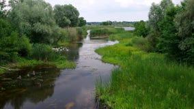 Paisagem do verão com rio pequeno Kolomak, oblast de Poltavsk, Ucrânia central filme