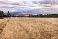 A paisagem do verão com trigo e a alfazema colocam em Provence Foto de Stock