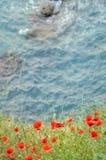Paisagem do verão com um campo da papoila Fotos de Stock
