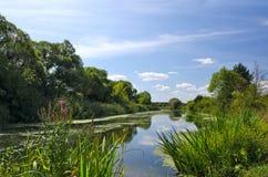 Paisagem do verão com um rio imagem de stock