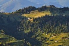 Paisagem do verão da parte superior da montanha, negligenciando a cordilheira e os pinhos verdes imagem de stock royalty free