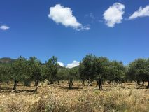Paisagem do verão 2016 de Sicília Etna fotos de stock