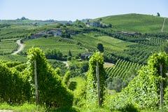 Paisagem do verão em Langhe (Itália) Foto de Stock Royalty Free