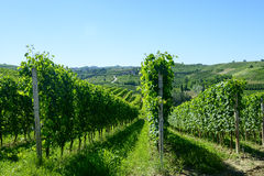 Paisagem do verão em Langhe (Itália) Imagens de Stock