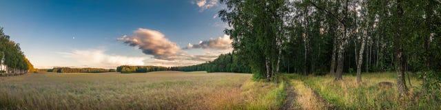 Paisagem do verão no campo beira entre o campo e a floresta agrícolas fotos de stock
