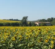 Paisagem do verão nos marços (Itália) Imagens de Stock