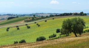 Paisagem do verão nos marços (Itália) Fotos de Stock Royalty Free
