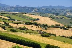 Paisagem do verão nos marços Itália perto de Ostra Foto de Stock