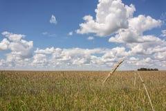 Paisagem do VERÃO O ponto no campo e no horizonte do fundo Fotos de Stock Royalty Free