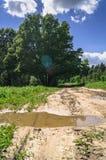 Paisagem do VERÃO Pudle na estrada de terra rural ao longo da floresta, subúrbios de Moscou, Rússia Imagens de Stock