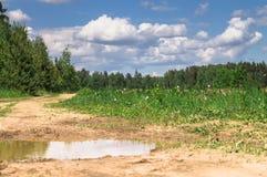 Paisagem do VERÃO Pudle na estrada de terra rural ao longo da floresta, subúrbios de Moscou, Rússia Fotos de Stock Royalty Free