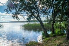 Paisagem do VERÃO Vista cênico da floresta ribeirinho aos espaços infinitos do lago Seliger, região de Tver imagem de stock