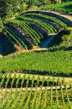 Paisagem do vinhedo de Fronsac, vinhedo sul a oeste de França Foto de Stock
