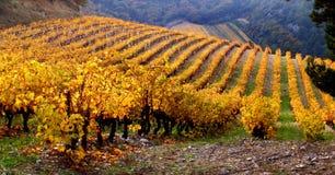 Paisagem do vinhedo no outono Imagens de Stock Royalty Free