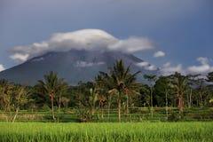 Paisagem do vulcão de Merapi, Java, Indonésia foto de stock