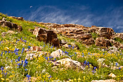 Paisagem do Wildflower com lua Foto de Stock Royalty Free