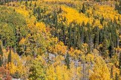 Paisagem dos álamos tremedores de Colorado na queda Fotografia de Stock