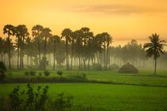 Paisagem dos campos de almofada em Andhra Pradesh imagens de stock