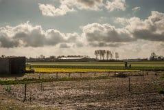 Paisagem dos campos de flor com o pai e o filho que trabalham no th imagens de stock royalty free