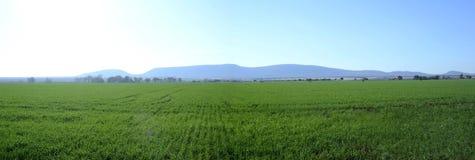 Paisagem dos campos de milho fotografia de stock